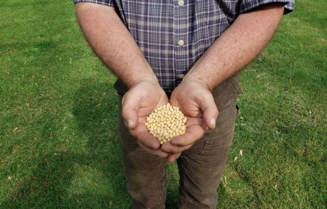 Un granjero muestra porotos de soja en Wilton, Iowa (REUTERS/Kia Johnson)